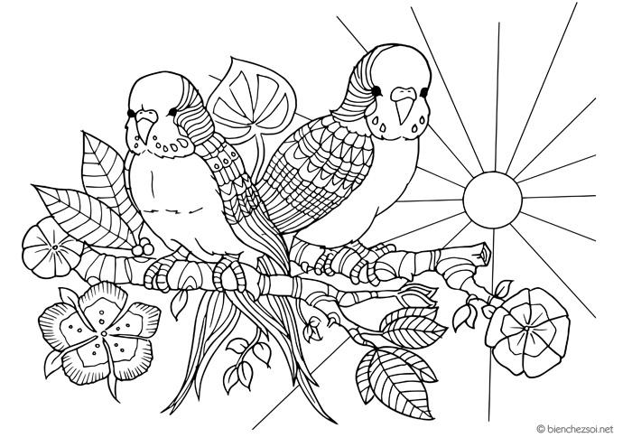 Top 50 Coloriage Anti Stress Oiseaux Coloriages à