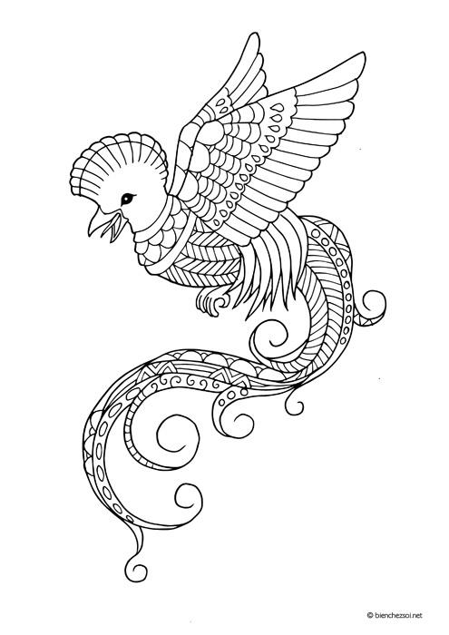 Coloriage Oiseau Quetzal Dessin Anti Stress Gratuit Pour Adulte