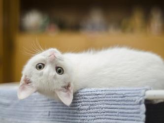 Votre chat serait-il influencé par votre personnalité ?