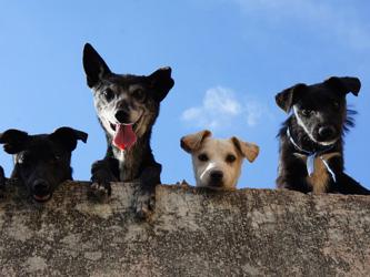 Une Chinoise ouvre sa maison à 1300 chiens abandonnés