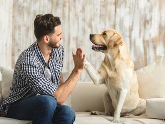 Envie d'un chien ? Empruntez-le à quelqu'un !