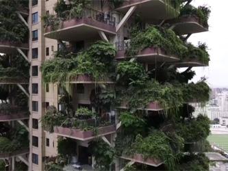 Un projet de forêt verticale tourne au fiasco en Chine