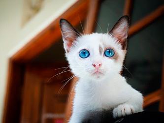 Des appartements spéciaux pour célibataires avec chat