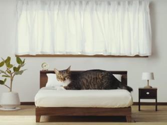 Des meubles japonais sur-mesure pour votre chat
