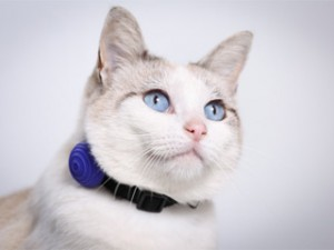 Un collier qui vérifie que votre animal va bien
