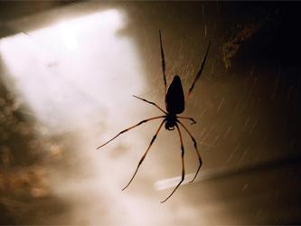 Faut-il laisser les araignées dans la maison ?