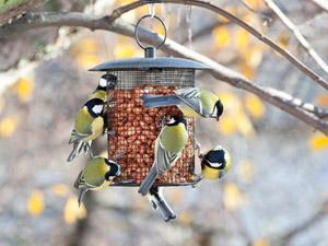 Votre jardin en hiver : pensez à nourrir les oiseaux