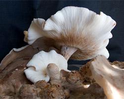 Comment cultiver ses propres champignons ?