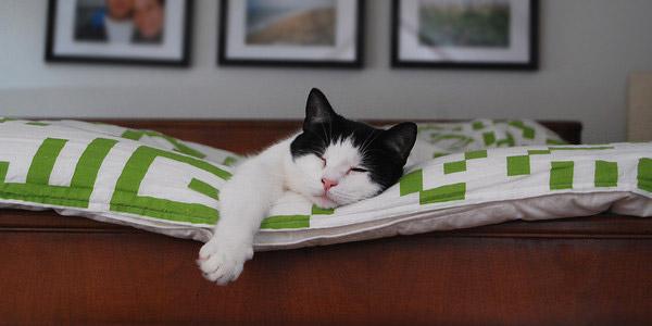 adopter un chat la maison comment a se passe. Black Bedroom Furniture Sets. Home Design Ideas