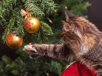 Comment éviter que votre chat attaque le sapin de Noël ?