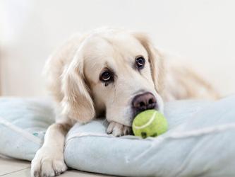 Le stress chez le chien : le repérer pour le soigner