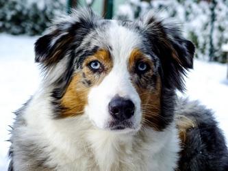 Les 15 chiens les plus adoptés actuellement