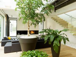 Choisir Une Plante D Interieur Selon La Piece De La Maison