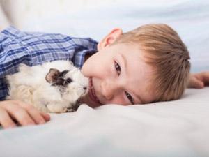 Le cochon d'inde, un compagnon idéal pour les enfants
