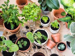 Cultivez vos herbes