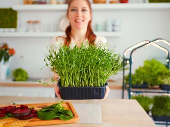 Comment cultiver ses propres micro-pousses chez soi ?