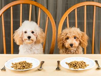 Comment doser les croquettes pour son chien ?
