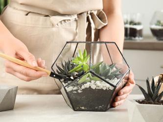 Comment fabriquer le plus beau terrarium