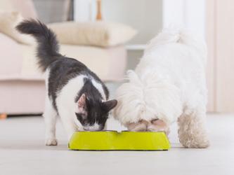 Des objets connectés pour le bien-être de vos animaux