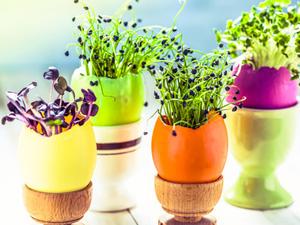 La germination des graines pas pas - Faire germer des graines de potimarron ...