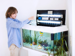 Installer un aquarium