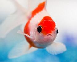 L'aquariophilie à votre portée
