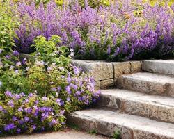 Achetez votre jardin