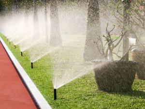 Comment entretenir son jardin en été ?