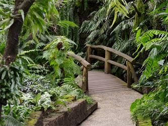 Retour à la nature : un jardin comme une jungle