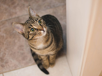 Le langage des chats : comprendre votre matou