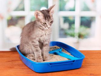 Litière du chat : faites le bon choix !