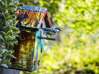 5 bonnes raisons d'installer des nichoirs à oiseaux