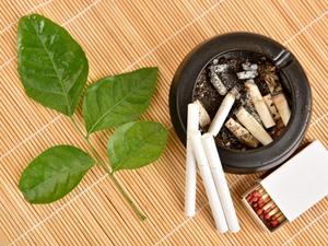 Arrêter de fumer, les plantes qui nous aident