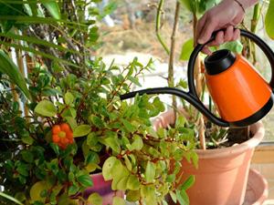 Quelles plantes rentrer chez soi en hiver ?