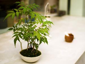 Dépolluez votre intérieur avec des plantes