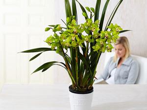 Ouvrez-vous aux plantes d'intérieur