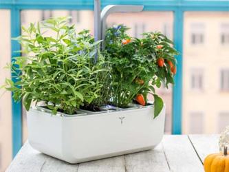 Les potagers intérieurs, pour jardiniers citadins
