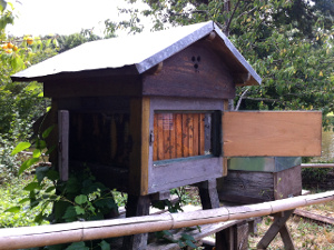 installer des ruches dans son jardin l 39 apiculteur amateur. Black Bedroom Furniture Sets. Home Design Ideas